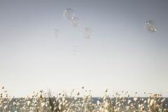 As bolhas que flutuam através de um céu vazio do verão com uma faixa de coelhos de florescência atam a borda das gramas no fundo Fotos de Stock