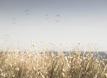 As bolhas que flutuam através de um céu vazio do verão com uma faixa de coelhos de florescência atam a borda das gramas no fundo Imagens de Stock Royalty Free