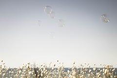 As bolhas que flutuam através de um céu vazio do verão com uma faixa de coelhos de florescência atam a borda das gramas no fundo Imagem de Stock