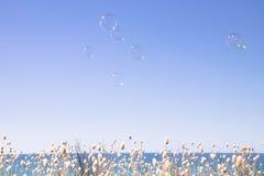 As bolhas que flutuam através de um céu vazio do verão com uma faixa de coelhos de florescência atam a borda das gramas no fundo Imagens de Stock