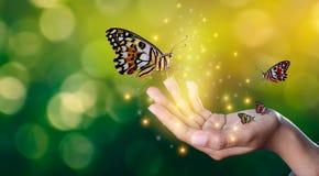As borboletas estão nas mãos das meninas com encontro doce de brilho das luzes entre uma borboleta humana da mão fotografia de stock royalty free
