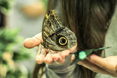 As borboletas estão sentando-se nas mãos de uma menina Foto de Stock Royalty Free