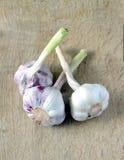 As cabeças do alho maduro encontram-se no fundo de madeira Fotografia de Stock Royalty Free