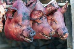 As cabeças do porco aprontam-se para cozinhar para um banquete de casamento em Khonoma, Nagaland, Índia imagens de stock royalty free