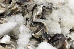 As cabeças dos peixes no gelo fora de um peixe compram Imagens de Stock