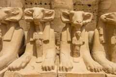 As cabras dirigiram as esfinges - Criosphinxes na cidade antiga de Thebes, moderno-dia Luxor, Egito imagem de stock royalty free
