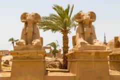 As cabras dirigiram esfinges e a palmeira na cidade antiga de Thebes, moderno-dia Luxor, Egito fotografia de stock
