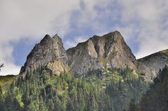 As cabras-montesas apedrejam das montanhas de Carpathians Foto de Stock