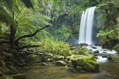 As cachoeiras da floresta úmida, Hopetoun caem, Victoria, Austrália Imagem de Stock