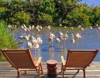As cadeiras de sala de estar para o resto e birdwatching imagem de stock