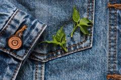 As calças de brim pocket em um revestimento com uma luva um fundo, mola florescem, verde saem nele Foto de Stock