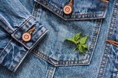 As calças de brim pocket em um revestimento com uma luva um fundo, mola florescem, verde saem nele Imagem de Stock