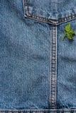 As calças de brim pocket em um revestimento com uma luva um fundo, mola florescem, verde saem nele Fotos de Stock Royalty Free