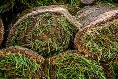 As camadas de gramado são próximas fotografia de stock royalty free