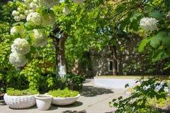As camas de flor no verão jardinam com hortênsia de florescência fotografia de stock royalty free