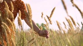 As caminhadas bonitas da jovem mulher no campo recolhem um ramalhete das flores e dos spikelets Retrato da fêmea atrativa na gram filme