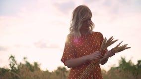 As caminhadas bonitas da jovem mulher no campo recolhem um ramalhete das flores e dos spikelets Retrato da fêmea atrativa na gram video estoque
