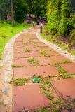 As caminhadas longas dos lados são naturais Fotos de Stock Royalty Free