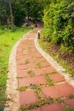 As caminhadas longas dos lados são naturais Foto de Stock