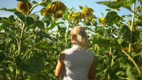 As caminhadas louras felizes bonitas da mulher no girassol colocam o verão video estoque