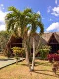 As Caraíbas, palmeiras e construção com um telhado feito do leav da palma Imagem de Stock