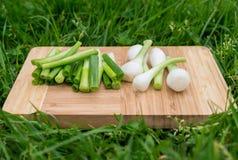 As cebolas verdes frescas na placa de corte de madeira velha, alimento do close up, dispararam fora Fotografia de Stock Royalty Free