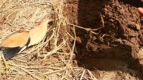 As cegonhas morrem na terra filme