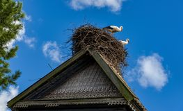 As cegonhas sentam-se no ninho no telhado no verão Imagem de Stock Royalty Free