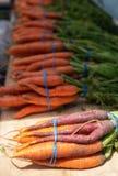 As cenouras orgânicas doces frescas bonitas nas cores diferentes, alaranjado, roxas, em hastes verdes nos grupos fecham-se acima  imagens de stock royalty free