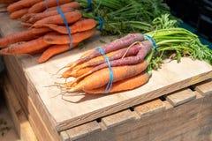 As cenouras orgânicas doces frescas bonitas nas cores diferentes, alaranjado, roxas, em hastes verdes nos grupos fecham-se acima  fotos de stock