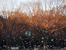 As centenas de bolhas travaram na luz solar do parque apenas aproximadamente para estourar Fotografia de Stock Royalty Free