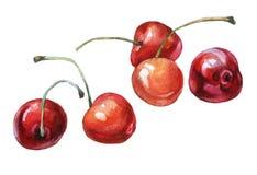 As cerejas entregam a pintura tirada da aquarela ilustração stock