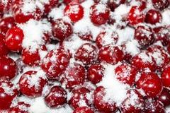 As cerejas maduras são cobertas com o açúcar para enlatar Fundo suculento, brilhante Fotos de Stock
