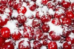 As cerejas maduras são cobertas com o açúcar para enlatar Fundo suculento, brilhante Fotografia de Stock Royalty Free