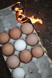 As chamas encaixotam com ovos da galinha Imagens de Stock
