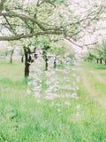 As cisnes de papel estão pendurando na árvore no campo verde Imagens de Stock