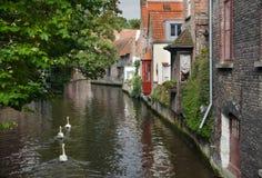 As cisnes no canal de Bruges Fotografia de Stock