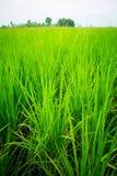As colheitas no campo, Fotografia de Stock Royalty Free