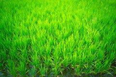 As colheitas no campo Imagem de Stock