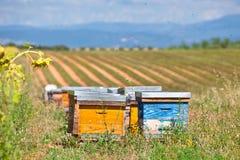 As colmeias no girassol colocam em Provence, França fotografia de stock
