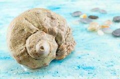 As conchas do mar interessantes fecham-se acima Fotos de Stock