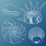 As conchas do mar vector o grupo ilustração royalty free