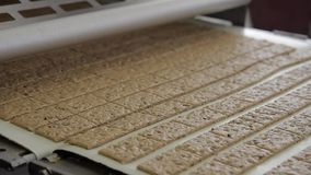 As cookies da noz movem-se ao longo da correia transportadora no bakeryshop dentro video estoque