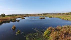 As cores brilhantes do outono no parque pelo lago Silhueta do homem de negócio Cowering vídeos de arquivo