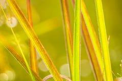 As cores da natureza em torno de nós Imagem de Stock Royalty Free