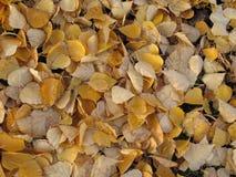 As cores da queda de Autumm na manhã das folhas iluminam-se em Anchorage, Alaska Imagem de Stock Royalty Free