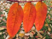 As cores da queda de Autumm na manhã das folhas iluminam-se em Anchorage, Alaska Foto de Stock