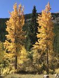 As cores da queda emergem Imagens de Stock Royalty Free