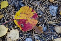 As cores de um outono sueco imagens de stock