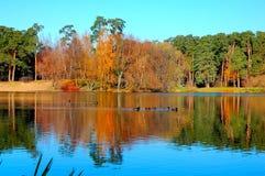 As cores do outono fotos de stock royalty free